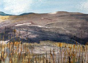 moorland-marsh